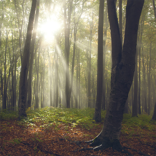 How to edit sun rays coming through the trees in a photo