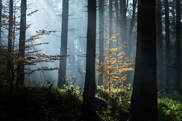 Photo editing in 60 seconds – enhancing rays in the forest