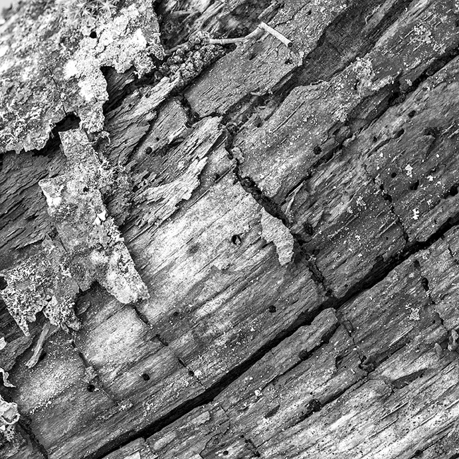 14-details-of-nature-Toma-Bonciu