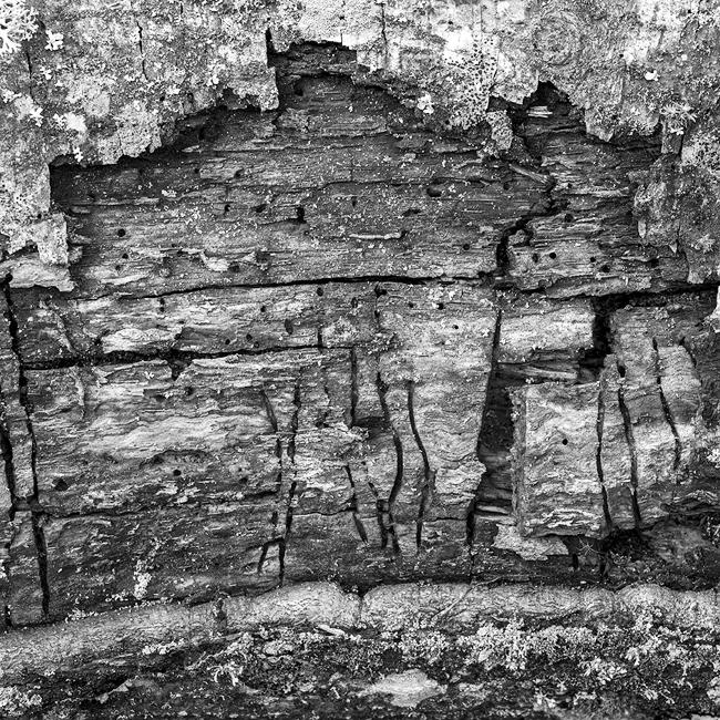 16-details-of-nature-Toma-Bonciu