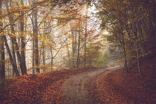 How to edit your autumn photos into the woods
