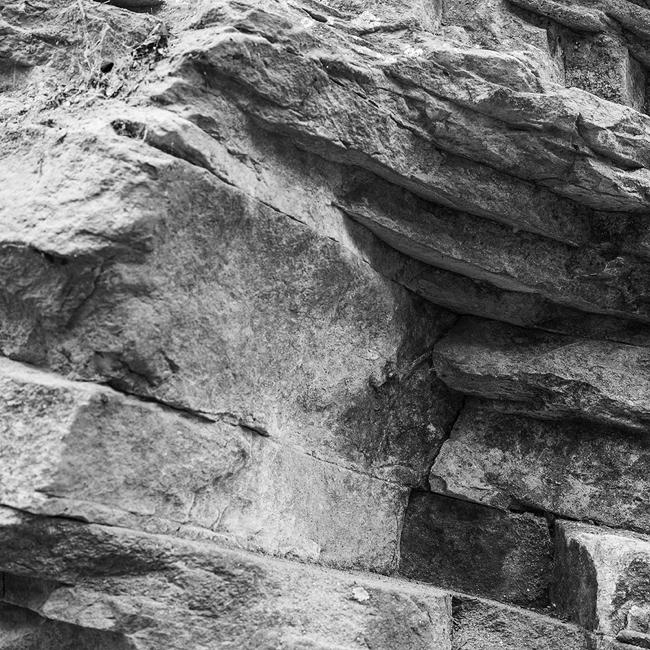 01-details-of-nature-Toma-Bonciu