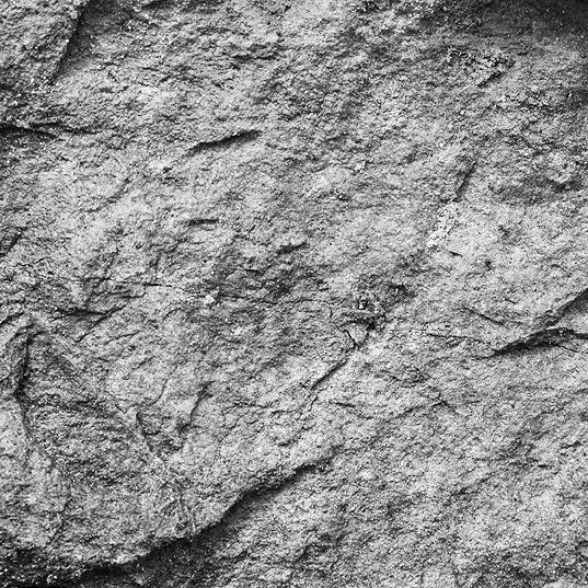 04-details-of-nature-Toma-Bonciu