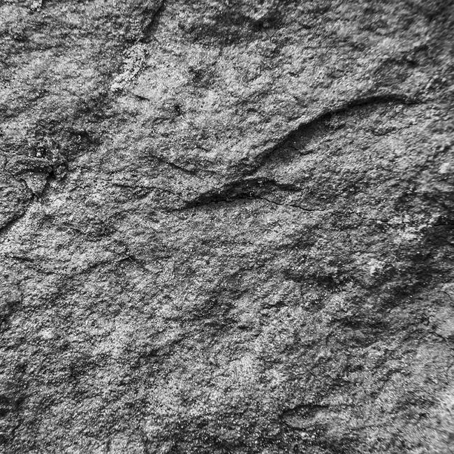05-details-of-nature-Toma-Bonciu