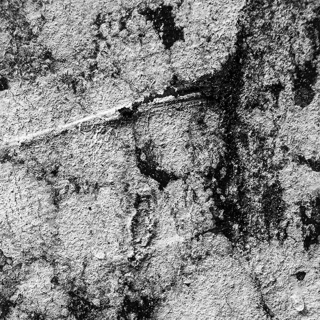 07-details-of-nature-Toma-Bonciu