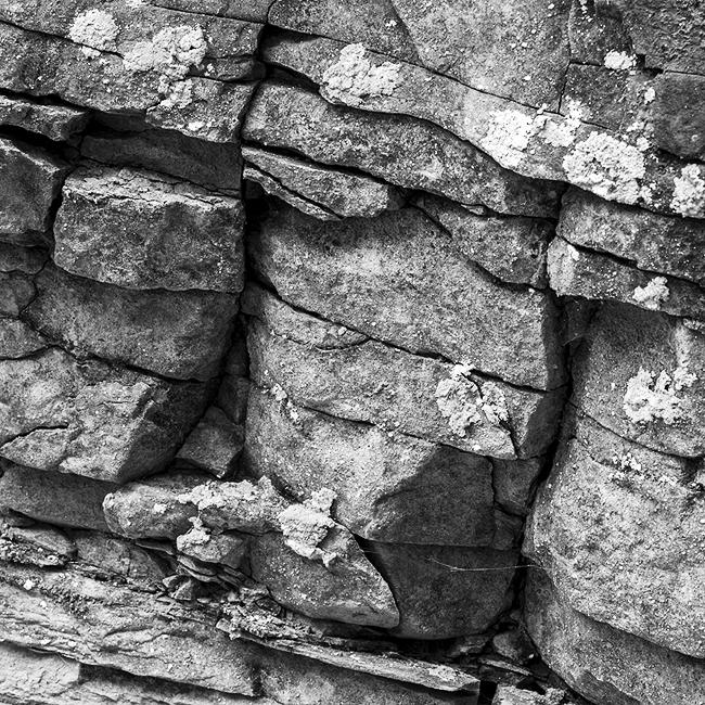 09-details-of-nature-Toma-Bonciu