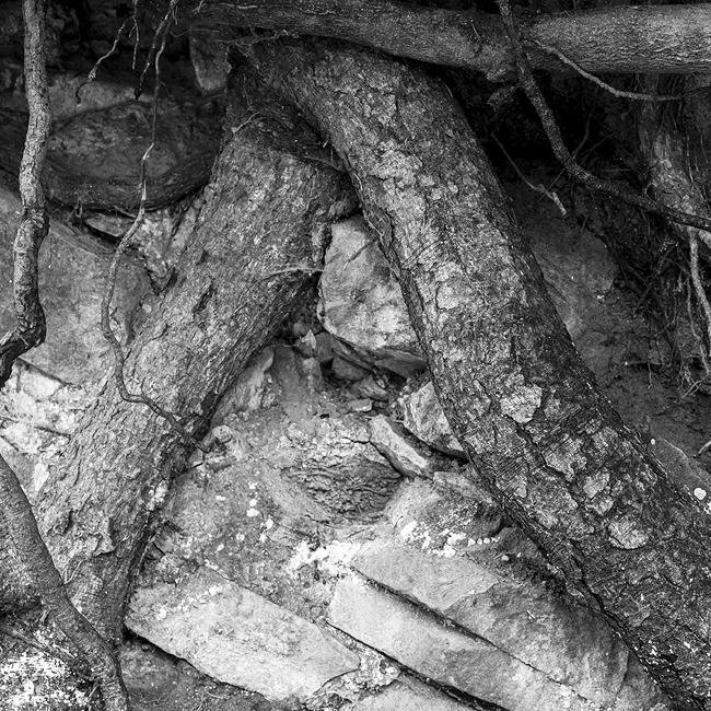 11-details-of-nature-Toma-Bonciu