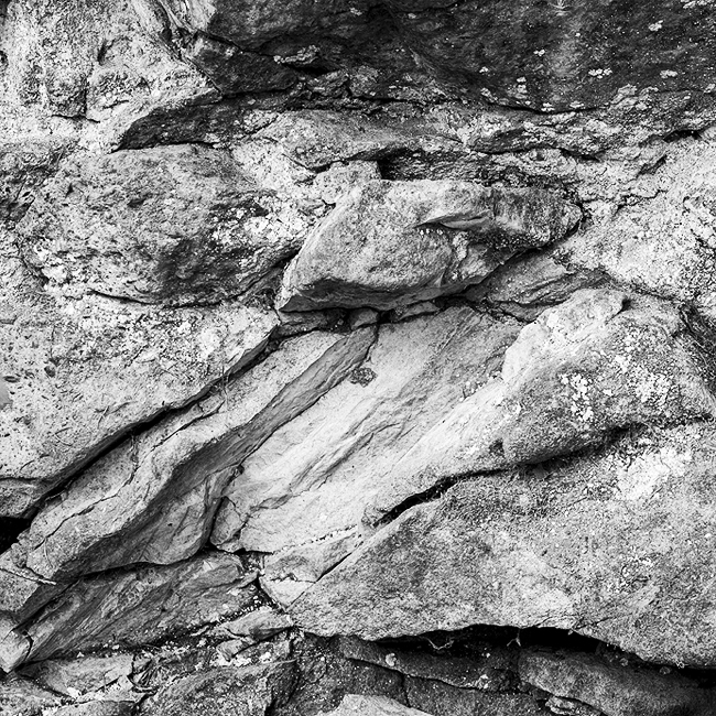 12-details-of-nature-Toma-Bonciu