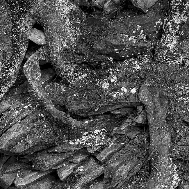 13-details-of-nature-Toma-Bonciu