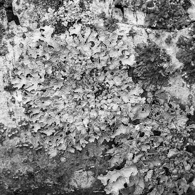 15-details-of-nature-Toma-Bonciu