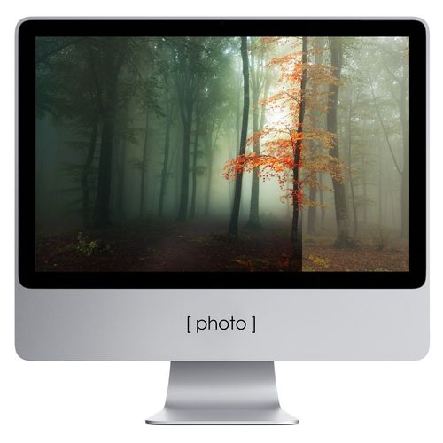 forest photography editing 500x500