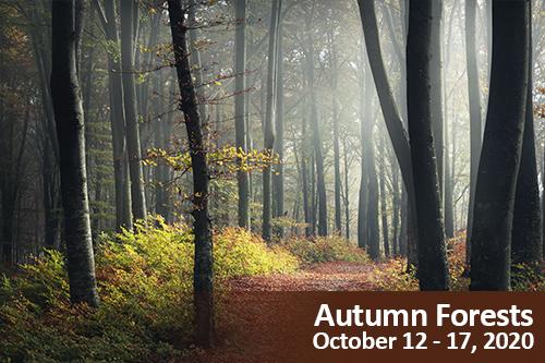 Autumn Forests Photo Tour