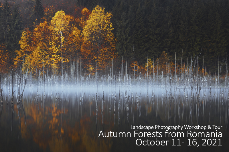 Autumn Forests Photo Tour – October 2021