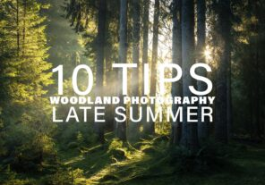 10 Tips for Woodland Photography in Late Summer
